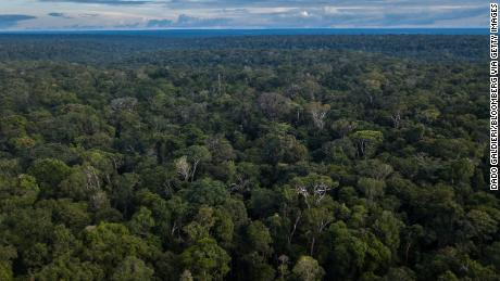 Researchers hope their research could help body recovery teams better detect human remains in large wooded areas, such as the Amazon rainforest.