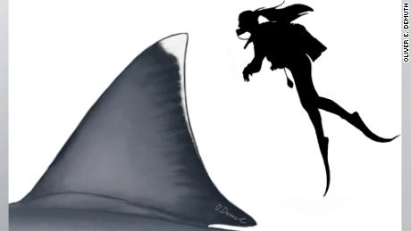 Measuring an estimated 1.6 meters (5.3 feet), the megalodon's fin was as tall as an adult human.