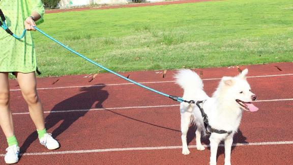 Correa para perros Baapet Strong con cómodo mango acolchado