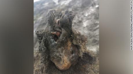 Un ours des cavernes de la période glaciaire parfaitement préservé a été trouvé en Russie - même son nez est intact