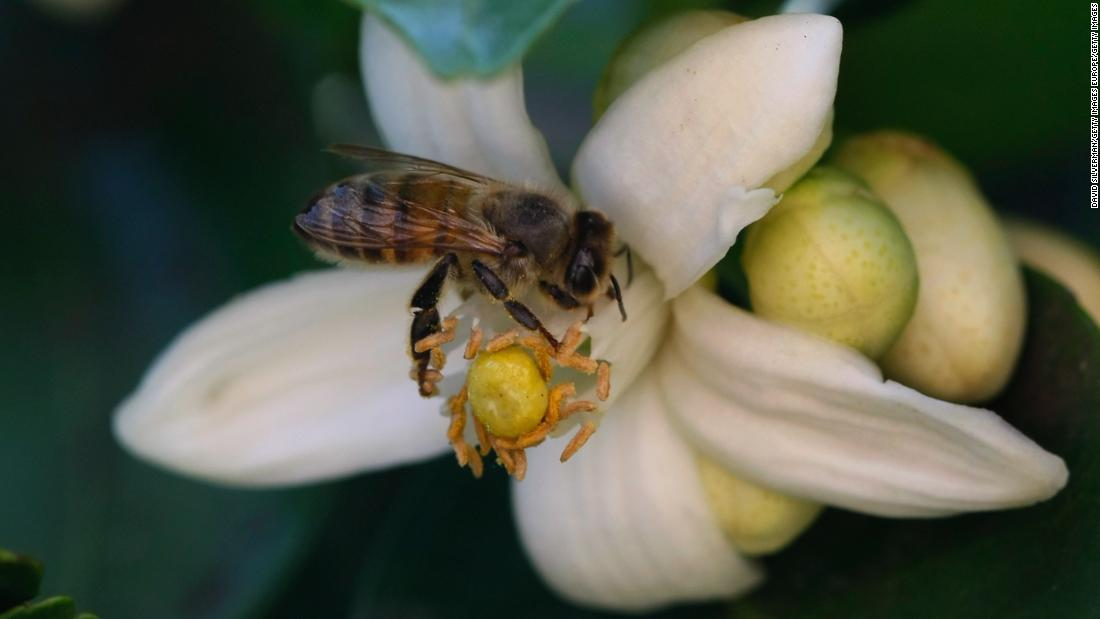 How smart tech could help save the world's honey bees
