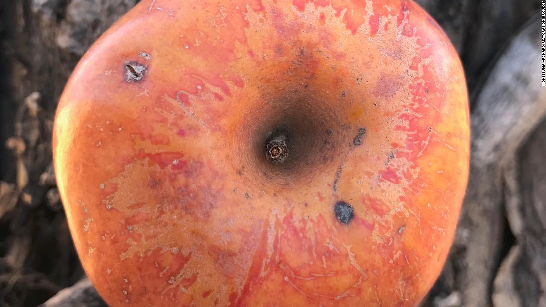200917082400 07 colorado orange apple super tease