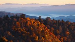 Fall foliage 2020: Map shows when to expect peak autumn leaves across the US