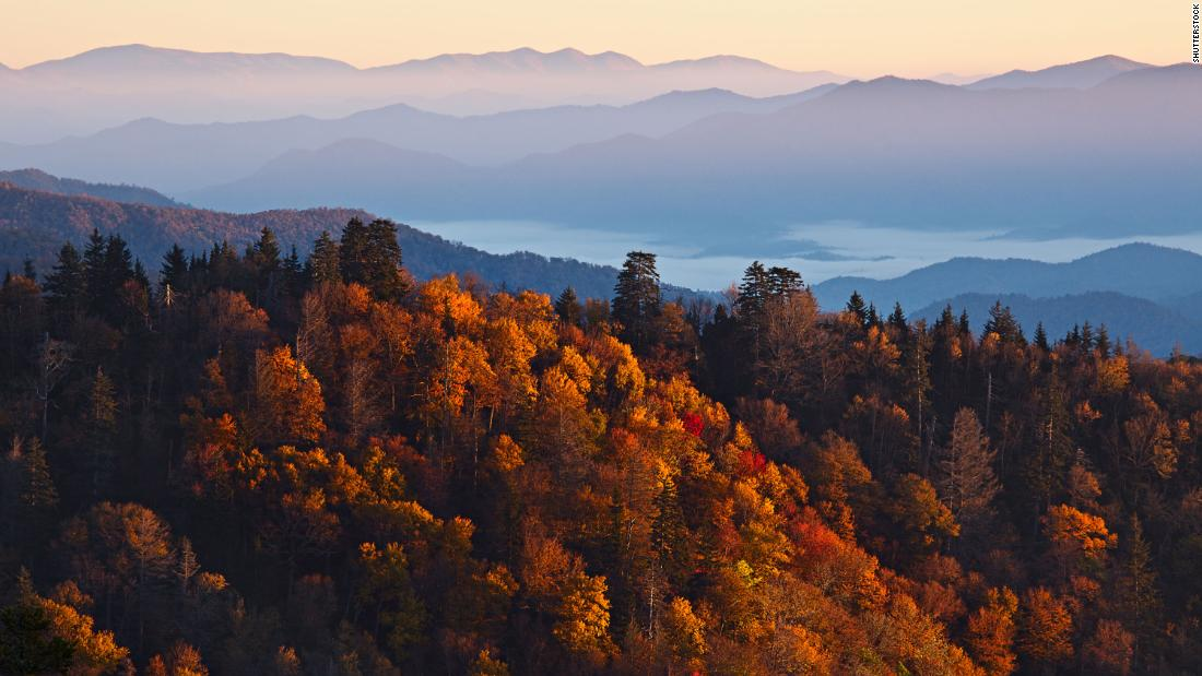 Science Behind Why Trees Lose Their Leaves, Change Color