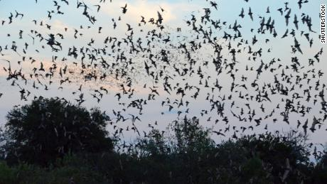 The National Weather Service spotted a massive bat colony on its weather radar
