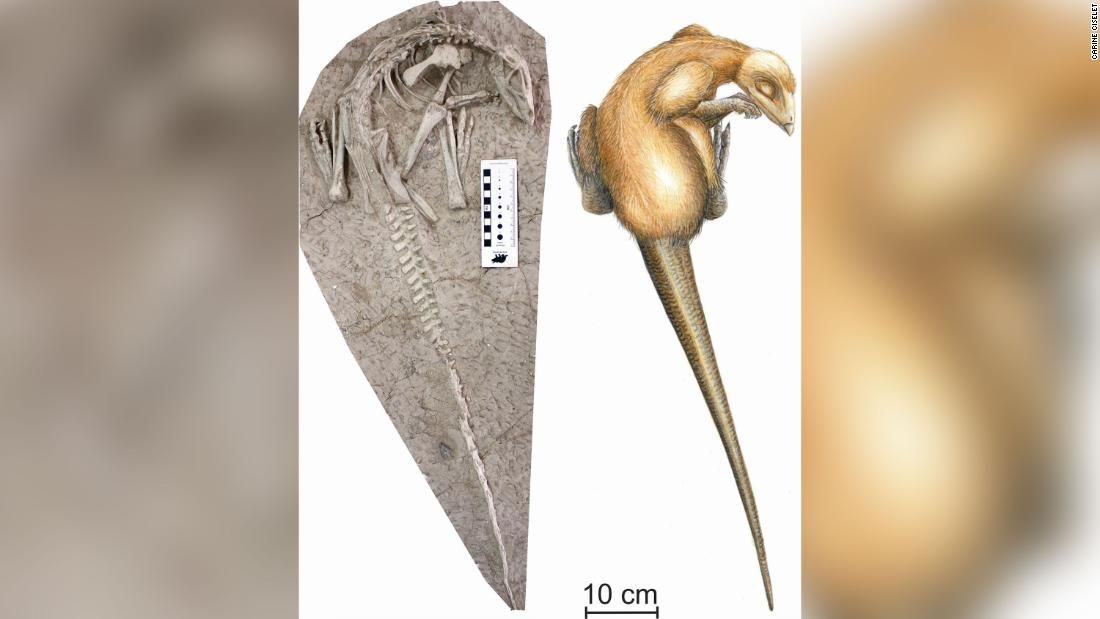 125 million-year-old dinosaur found buried by a volcanic eruption in China