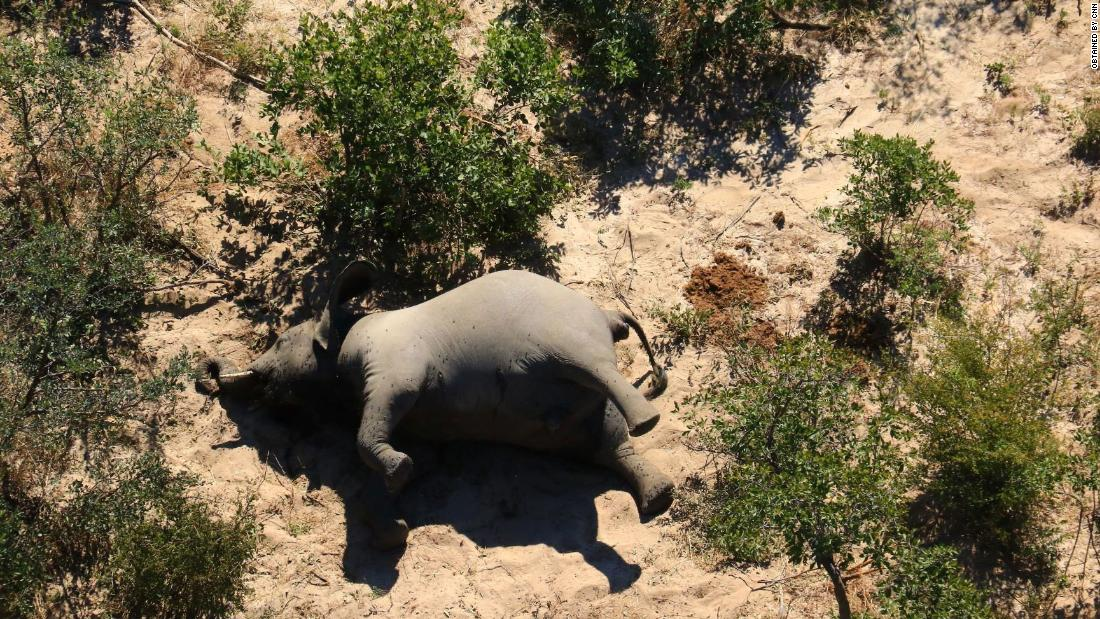 Toxins in water blamed for deaths of hundreds of elephants