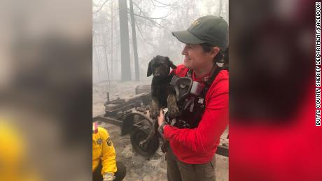 A puppy was pulled from the rubble in an area devastated by the wildfires. Rescuers named him Trooper.
