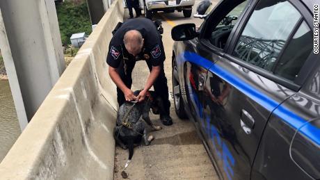 Un agent du service de police de Natchez enlève le harnais autour du chien.