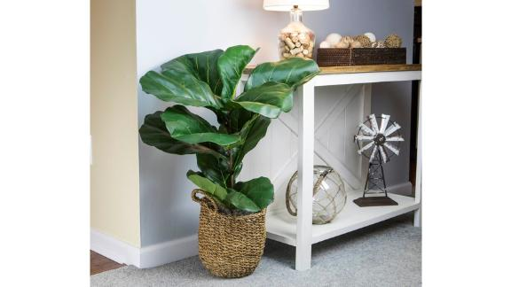 Bayou Breeze Fiddle-Leaf Fig Plant in Basket