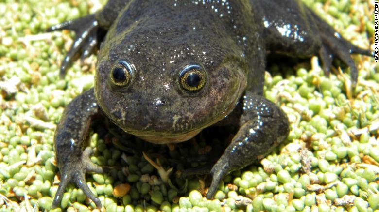 'Ghost' frog not seen for 80 years rediscovered in desert hot spring