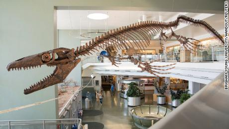 "Gnathomortis, or ""Jaws of Death,"" has been reclassified as a new genus of mosasaur."