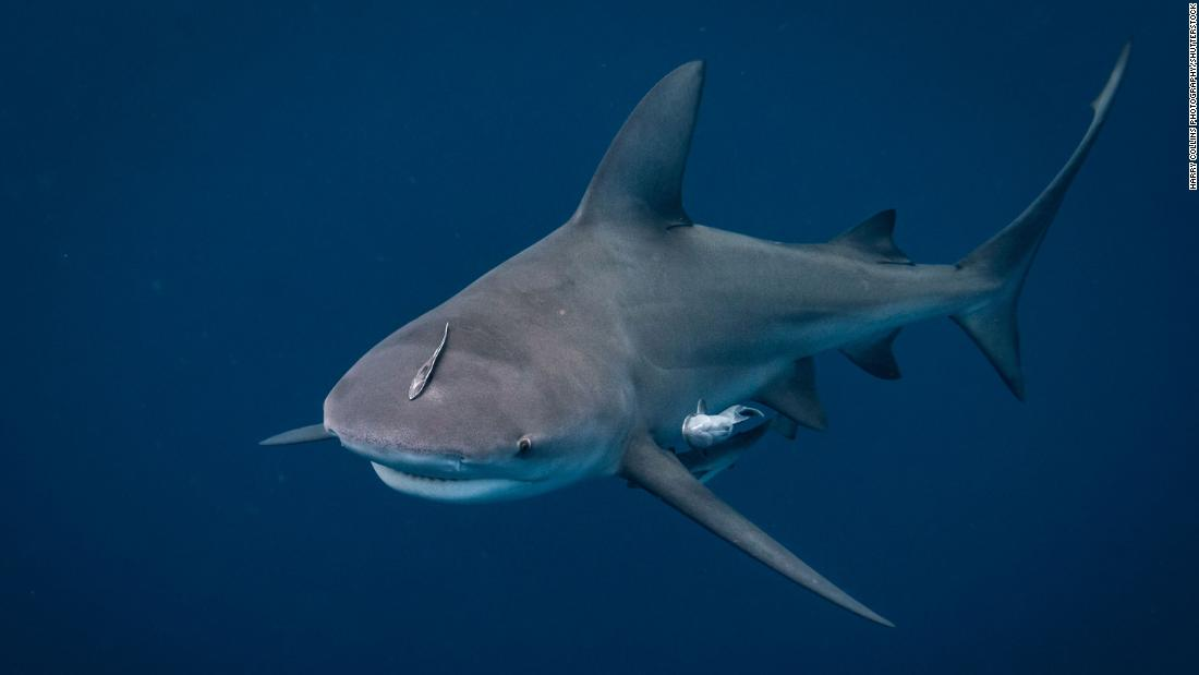As a shark latched on to her husband's shoulder, a pregnant woman sprang into action