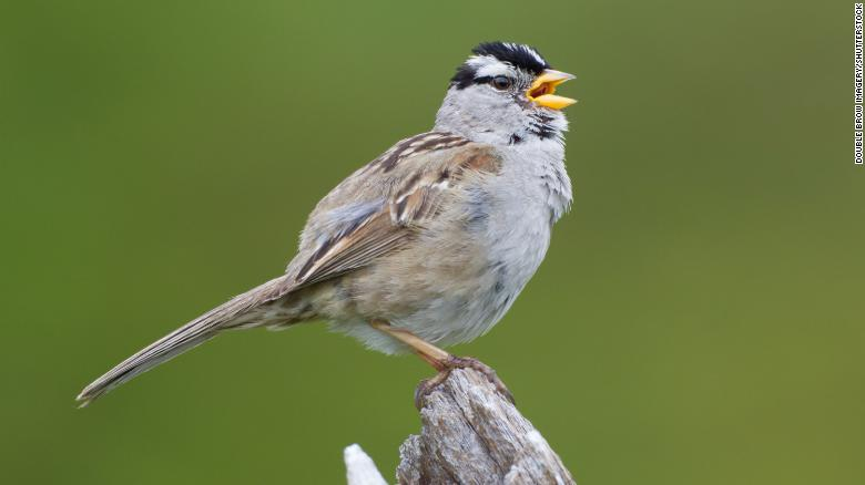 Birds in San Francisco started singing differently in the silence of the pandemic shutdown
