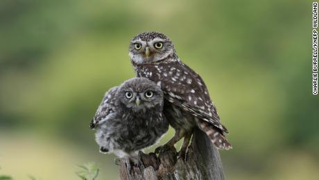Knepp has attracted 13 of the UK's 18 species of owl.