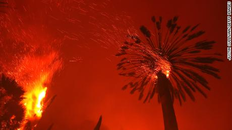 A palm tree casts embers in the Glass Fire.