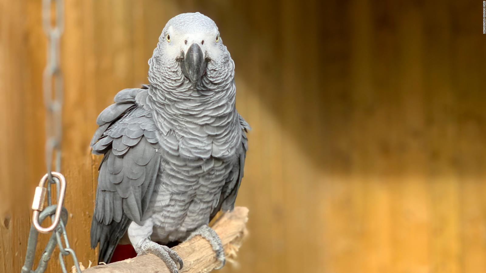 Parrots In British Wildlife Park Moved After Swearing At Visitors Cnn Travel