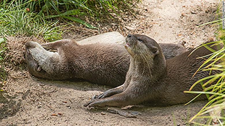 A lonely otter at a sanctuary finds love online through a dating site built just for him