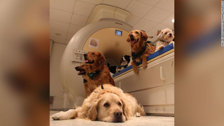 Dogs' brains aren't hardwired to care about human faces