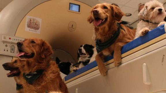 Dogs' brains react just as much to faces as the backs of heads.