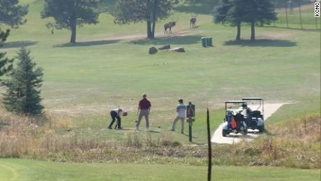 Elk roam Evergreen Golf Course near Denver as golfers set up. (Note: This is not Zak Bornhoft and his friends.)