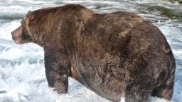 Fat Bear Week 2020 crowns its big winner