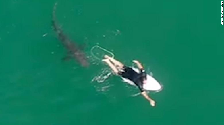 This surfer had no idea how close he came to a shark — until he saw the drone footage