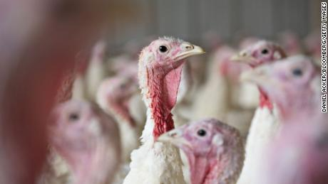 Grocers expect customers to shop for smaller turkeys this year.