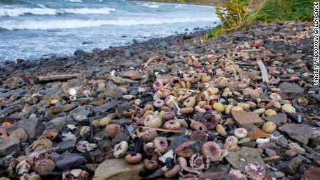 De grandes quantités de mollusques morts et d'autres créatures marines ont été trouvées à terre dans la zone de la plage de Khalaktyr.