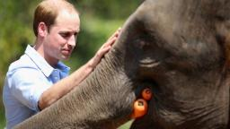 Prince William's Earthshot Prize launched as Nobel-like environment award | Daily's Flash 201007152259 01 prince william elephant file hp video  Prince William's Earthshot Prize launched as Nobel-like environment award | Daily's Flash 201007152259 01 prince william elephant file hp video