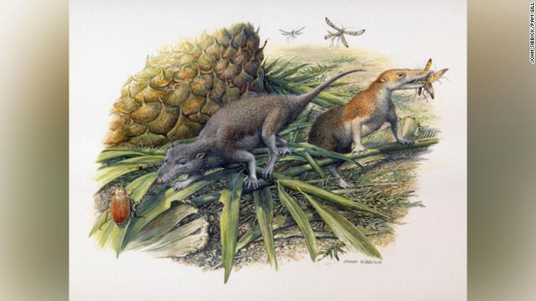 Morganucodon (left) and Kuehneotherium (right) hunting in Early Jurassic Wales 200 million years ago.