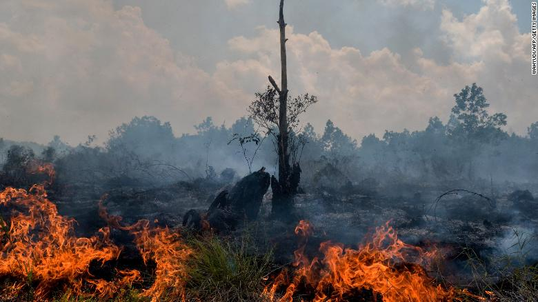 """<a href=""""https://www.cnn.com/interactive/2019/11/asia/borneo-climate-bomb-intl-hnk/"""">Borneo is burning: How the world's demand for palm oil is driving deforestation in Indonesia</a>"""