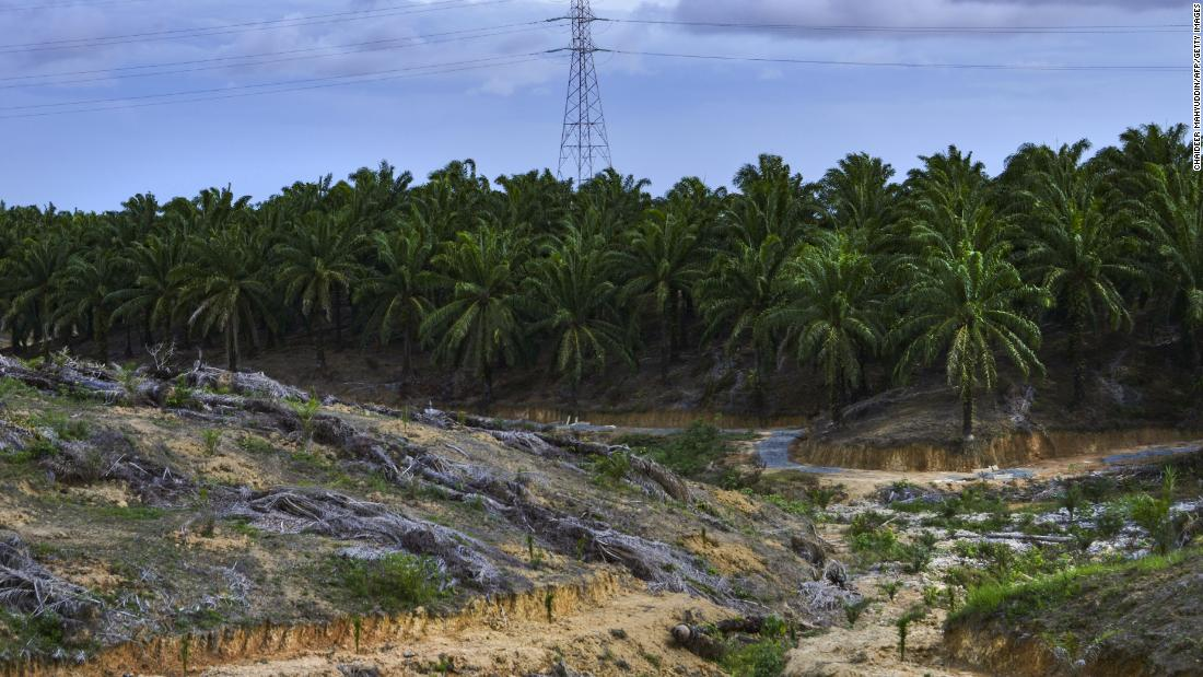 Analysis: Indonesia is putting business before the environment and that could be disastrous for its rainforests