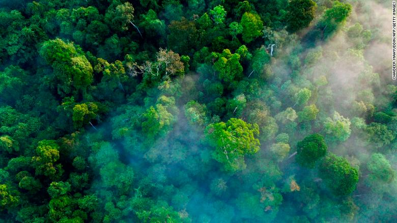 Indonesia's New Business Law Could Be Disastrous For Its Rainforests