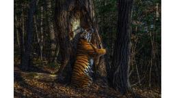 Wildlife Photographer of the Year Award winners revealed