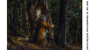Wildlife Photographer of the Year winners revealed, with tiger image scooping top prize