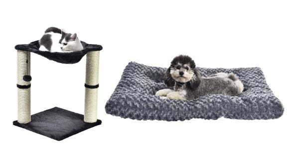 Pet Products from AmazonBasics, Solimo and Wag