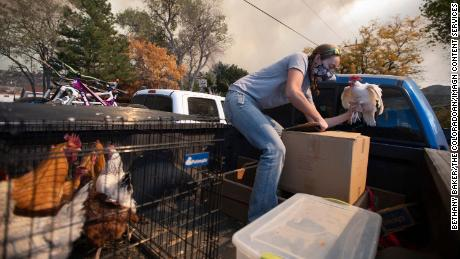 Airn Hartwig loads a chicken into a cardboard box as she evacuates due to the threat from the Cameron Peak Fire in Masonville, Colorado, on Wednesday.