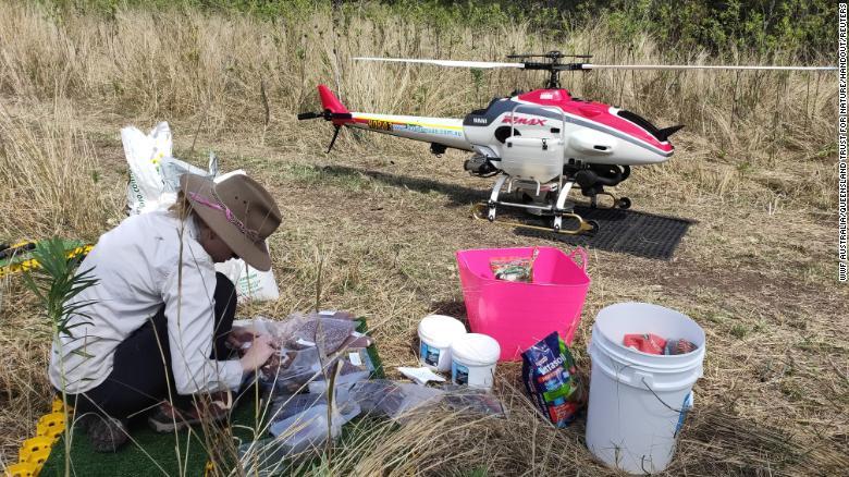 Drones to drop seeds to boost koala gum tree numbers after devastating Australia bushfires