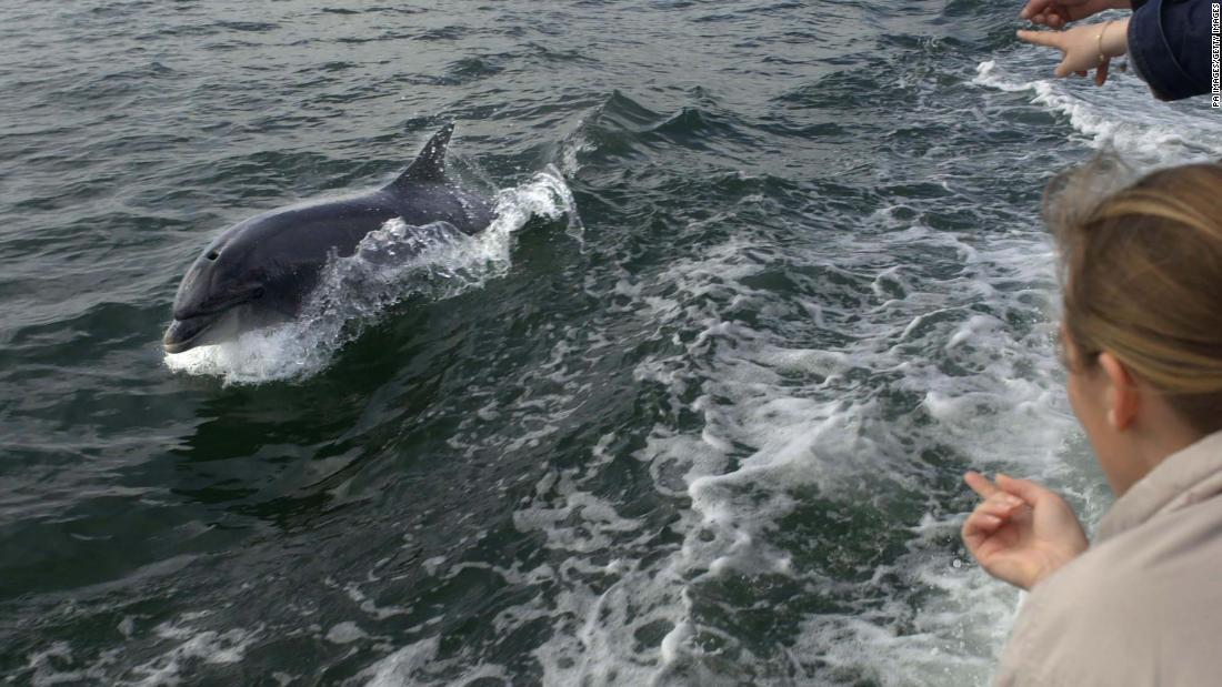 The search for Fungie: Ireland's beloved bottlenose dolphin is missing after 37 years