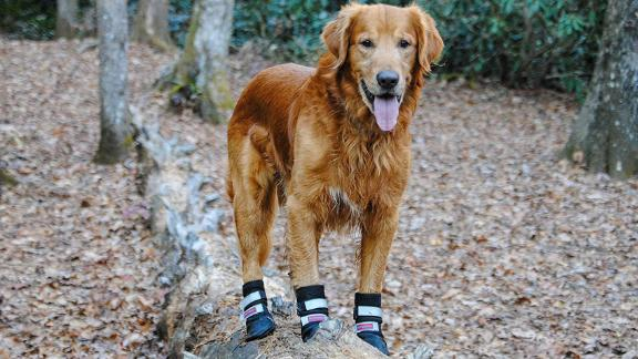 Bark Brite All-Weather Neoprene Paw Protector Dog Boots