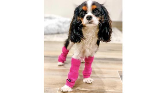 FetchDogFashions Dog Leg Warmers, Pair of 2
