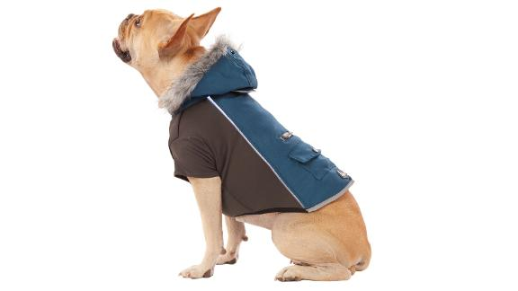 Arcadia Trail LED Light-Up Dog Coat