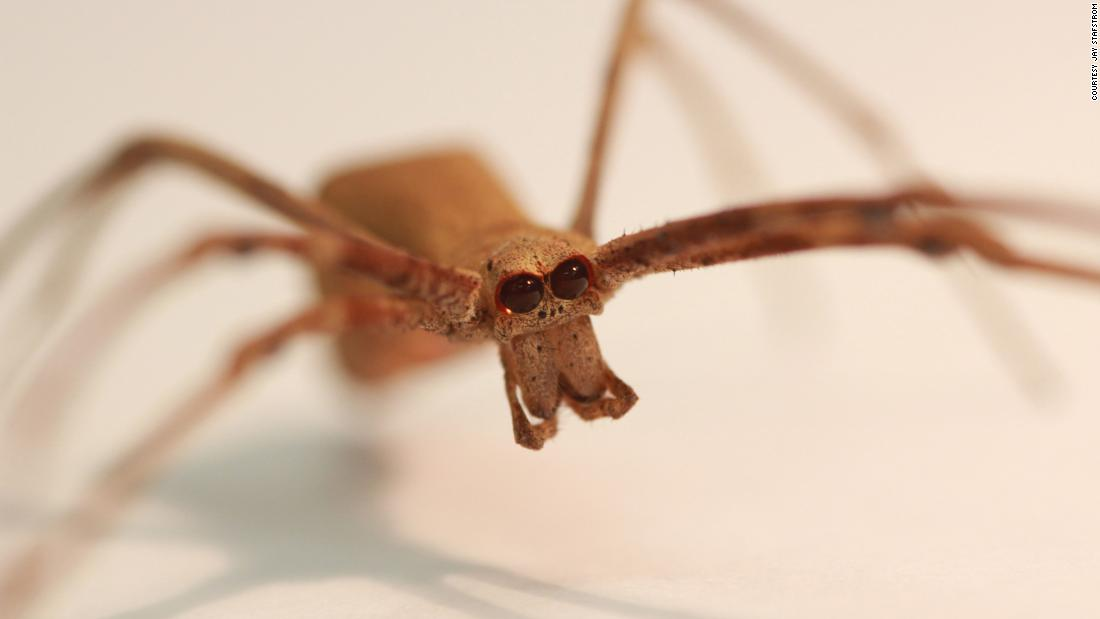 These spiders lack ears. But they can hear you