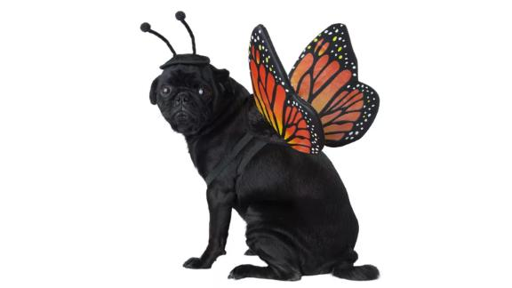 California Costumes Monarch Butterfly Pet Costume