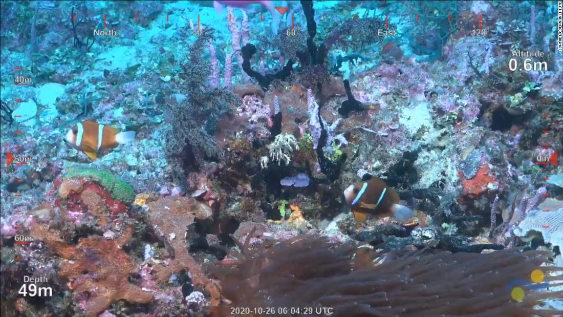 Watch what scientists found at new Australian reef