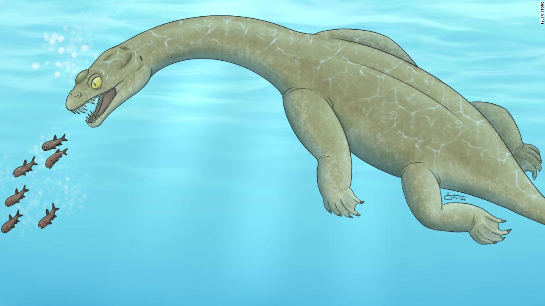 Newly discovered Triassic lizard could float underwater to pick off prey - CNN