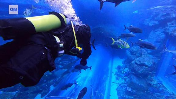 dubai aquarium global gateway spc intl_00000000.jpg