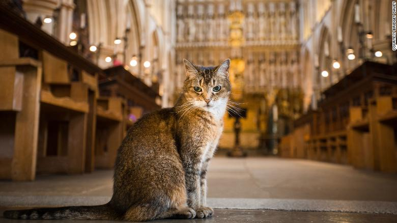 Cathedral hosts memorial service after 'enormously popular' resident stray cat dies