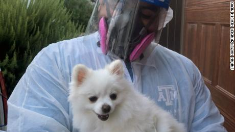 Texas A&M University student Ed Davila holds Stella, one of hundreds of household pets tested during A&M's study of pets exposed to Covid-19 by their infected owners. The 2½-year-old Pomeranian tested negative.